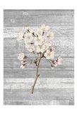 Cherry Blossom 1 Art Print