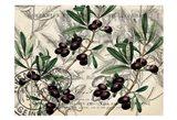 Olive Branch 1 Art Print