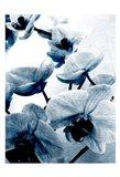 Climbing Orchids Art Print