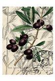 Olive Love 1 Art Print