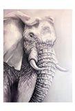 Elephant Trail 1 Art Print