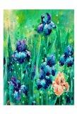 Irises 1 Art Print