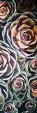 Fall Succulents Mate Art Print