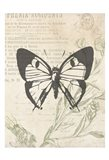 Lightened Vintage Insects Two Art Print