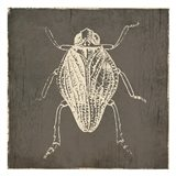 Bug Life One Art Print