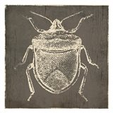 Bug Life Two Art Print
