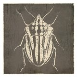 Bug Life Three Art Print