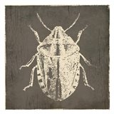 Bug Life Four Art Print