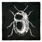 Bug Life Black Art Print