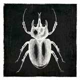 Bug Life Two Black Art Print