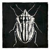 Bug Life Three Black Art Print