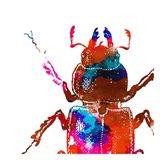 Water Bugs Two Art Print