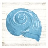 Shell On Wood Art Print