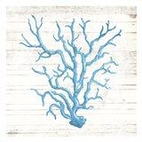 Coral On Wood Art Print