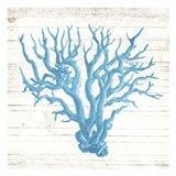 Coral On Wood Mate Art Print
