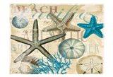 Beach Shells R1 Art Print