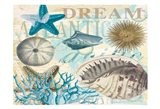 Dream Shells R1 Art Print