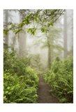 Summer Fog Art Print