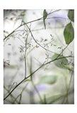 Soft Leaves I Art Print