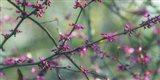 Springtime Branches Art Print