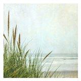North Coast Dunes 1 Art Print