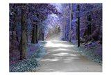Violet Glow Art Print