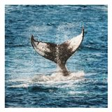 Tail Of The Whale Art Print