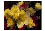 Roses 4 Art Print