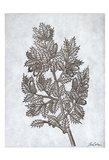 Oak Tree 3 Art Print
