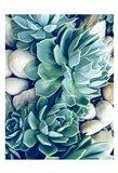 Succulents no words Art Print