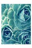 Succulents With Dew 2 Art Print