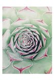 Succulent Red Tips Art Print
