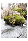 Winter Bog Art Print
