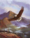Eagle Gliding Art Print