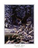 Eagle In Flight Art Print