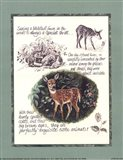 Deer Study Art Print