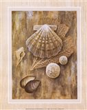 Assorted Shells Art Print