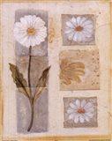 White Flower Montage Art Print