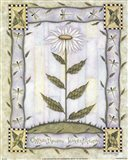 Chrysanthemum Leucanthemum Art Print