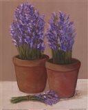 Purple Flowers In Pots Art Print