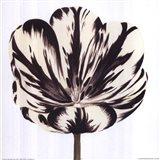 Black White Flower Art Print