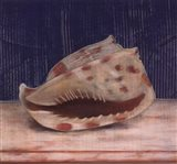 Brown Spotted Shell Art Print