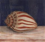 Striped Shell Art Print