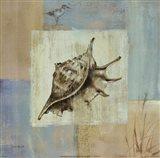 Sea Finds IV Art Print