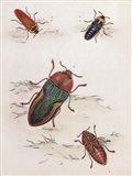 Chelsea Beetles-1 of 3 Art Print