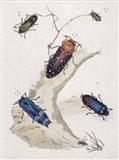 Chelsea Beetles-2 of 3 Art Print
