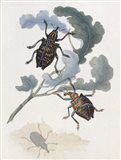 Chelsea Beetles-3 of 3 Art Print