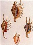 Shells-8 of 8 Art Print
