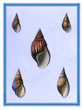 Shells-1 of 4 Art Print