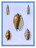 Shells-2 of 4 Art Print
